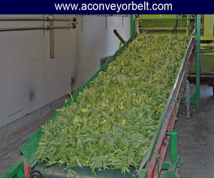 Supplier Of Conveyor Belts For Agricultural Industry, Portable Belt Conveyor Used In Agriculture In Gujarat
