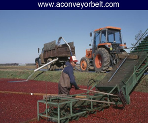 Conveying System For Agriculture Gujarat, Exporter Of Conveyor Belts Used For Agriculture